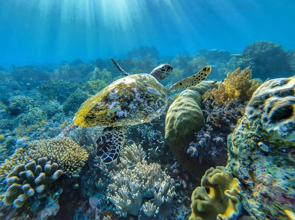 Buceo Raja Ampat snorkel mundo marino paraíso tortuga